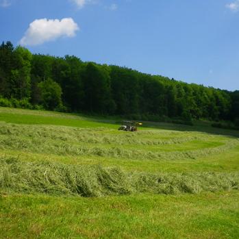 Biogas plants using grass –the advantages of diversity